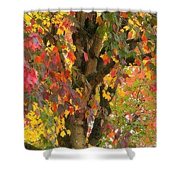 Rainbow Maple Shower Curtain