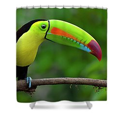 Rainbow Party Shower Curtain