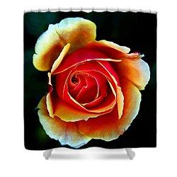 Shower Curtain featuring the photograph Rainbow Rose by John Haldane