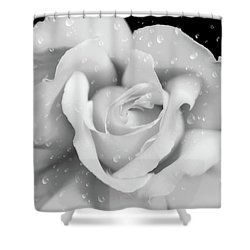 Shower Curtain featuring the photograph Raindrops On Rose Black And White by Jennie Marie Schell