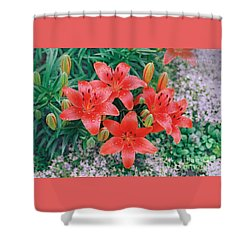 Shower Curtain featuring the photograph Raindrops On Crimson Pixie Asiatic Lily by Nancy Lee Moran