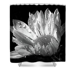 Raindrops On Daisy Black And White Shower Curtain by Jennie Marie Schell