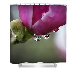 Shower Curtain featuring the photograph Raindrops On Magnolias by Katie Wing Vigil
