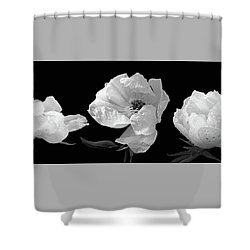 Raindrops On Peonies Black And White Panoramic Shower Curtain by Gill Billington