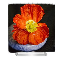 Shower Curtain featuring the photograph Raindrops On Poppy  by Jeanette French