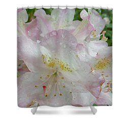 Raindrops On Rhododendron Shower Curtain