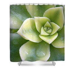 Shower Curtain featuring the photograph Raindrops On The Succulent by Elvira Butler