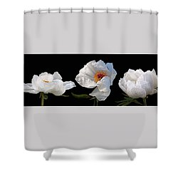 Raindrops On White Peonies Panoramic Shower Curtain by Gill Billington