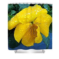 Raindrops On Yellow Pansy Shower Curtain by E Faithe Lester