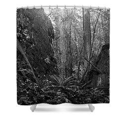 Shower Curtain featuring the photograph Rainforest Black And White by Sharon Talson