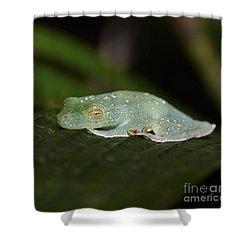 Rainforest Detail.. Shower Curtain by Nina Stavlund