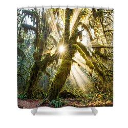 Rainforest Magic Shower Curtain