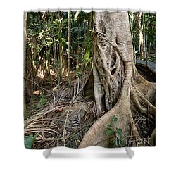 Shower Curtain featuring the photograph Rainforest Majesty by Linda Lees