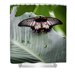 Shower Curtain featuring the photograph Raining Wings by Karen Wiles