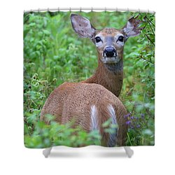 Rainy Day Doe Shower Curtain