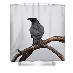 Rainy Day Raven Shower Curtain