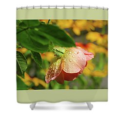 Shower Curtain featuring the photograph Raindrops On Roses - Floral Art From The Garden by Brooks Garten Hauschild