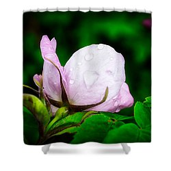 Rainy Day Rose Number 2 Shower Curtain