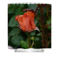 Rainy Rose Bud Shower Curtain