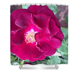 Rambling Rose Shower Curtain