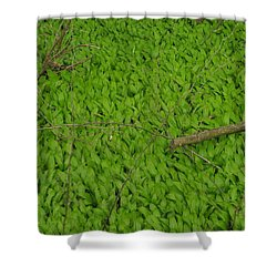 Ramsons  Shower Curtain