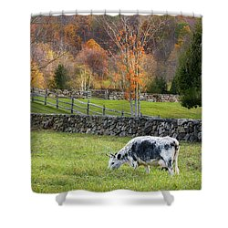 Shower Curtain featuring the photograph Randall Cattle Cow by Bill Wakeley