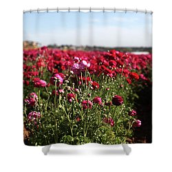 Ranunculus Field Shower Curtain