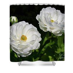 Ranunculus White Flowers Shower Curtain