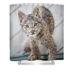 What Are You Shower Curtain