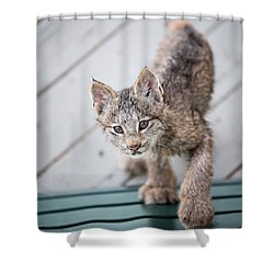 Does Click Mean Edible Shower Curtain