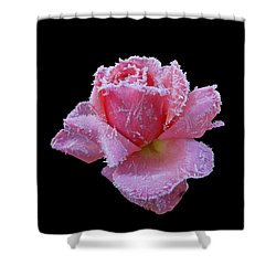 Rare Winter Rose Shower Curtain