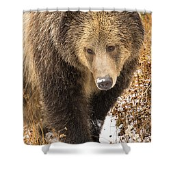 Shower Curtain featuring the photograph Ras by Aaron Whittemore