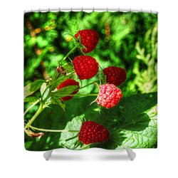 Raspberries Shower Curtain