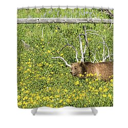 Raspberry, Sow Grizzly Shower Curtain