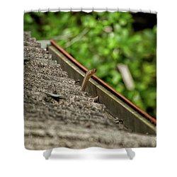 Rat Snake Shower Curtain by Venura Herath