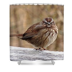 Rats ......it's Monday Morning Shower Curtain