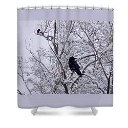 Raven And Magpie Shower Curtain