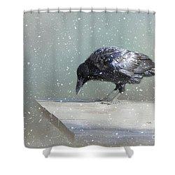 Raven In Winter Shower Curtain