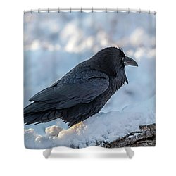 Shower Curtain featuring the photograph Raven by Paul Freidlund