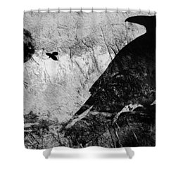 Raven Study 5 Shower Curtain