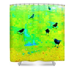 Ravens At Dick's Drive-in Shower Curtain