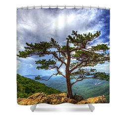 Ravens Roost Tree Shower Curtain