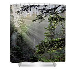 Morning Rays Through An Oregon Rain Forest Shower Curtain