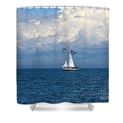 Razorbill Escort Shower Curtain