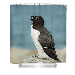 Razorbill Portrait Shower Curtain