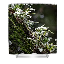 Reach For The Light Shower Curtain by Christopher L Thomley
