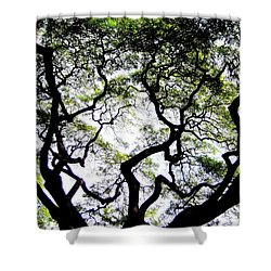 Reach For The Sky Shower Curtain by Karen Wiles