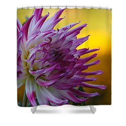 Reach Out Shower Curtain by Patricia Strand