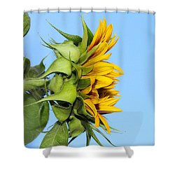 Reaching Sunflower Shower Curtain
