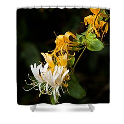 Reaching Shower Curtain by Christopher Holmes